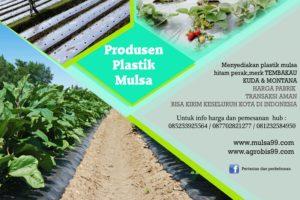 banner-plastik-mulsa-14