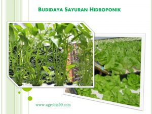 Cara Gampang Budidaya Sayuran Organik