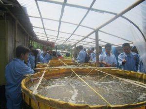 uv untuk atap kolam ikan